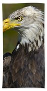 Almost There - Bald Eagle Bath Towel