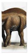 Amargasaurus Cazaui, A Prehistoric Era Bath Towel