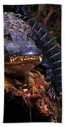 American Alligator On A Cypress Tree Bath Towel