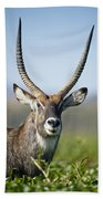 An Antelope Standing Amongst Tall Bath Towel