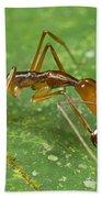 Ant Showing Large Mandibles Guyana Bath Towel
