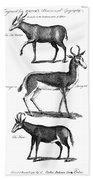 Antelopes Bath Towel