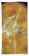 Archaeopteryx Lithographica Bath Towel
