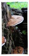 Artist Conk Mushroom  Bath Towel