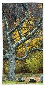 Autumn Grandfather Tree 2 Bath Towel