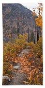 Autumn Path Bath Towel