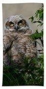 Baby Great Horned Owl Bath Towel