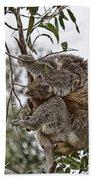 Baby Koala Bath Towel