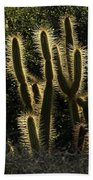 Backlit Cactus Bath Towel