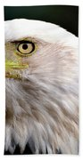 Bald Eagle Close Up Bath Towel
