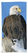 Bald Eagle Haliaeetus Leucocephalus Bath Towel