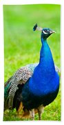 Beautiful And Pride Peacock On A Lawn Bath Towel