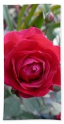 Beautiful Red Rose In A Small Garden Bath Towel