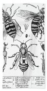 Bee Anatomy Historical Illustration Bath Towel