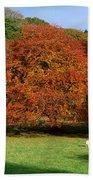 Beech Tree, Glendalough, Co Wicklow Bath Towel