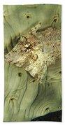 Beige Juvenile Filefish Hiding Bath Towel