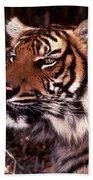 Bengal Tiger Watching Prey Bath Towel