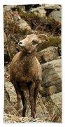 Big Horn On The Rocks Bath Towel