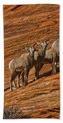 Bighorn Sheep, Zion National Park, Utah Bath Towel