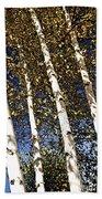 Birch Trees In Fall Bath Towel