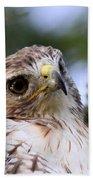 Bird - Red-tailed Hawk - Bashful Bath Towel