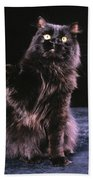 Black Persian Cat Reaches Bath Towel