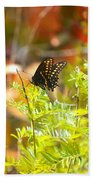 Black Swallow Tail Butterfly In Autumn Colors Bath Towel