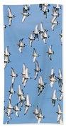 Black-tailed Godwit Limosa Limosa Flock Bath Towel