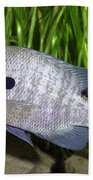 Bluegill Lepomis Macrochirus Bath Towel