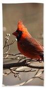 Bright Bold - Cardinal Bath Towel
