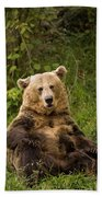 Brown Bear Ursus Arctos, Asturias, Spain Bath Towel