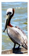 Brown Pelican And Blue Seas Bath Towel