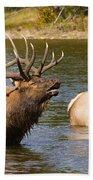 Bugling Bull Elk And 2 Female Cows In Estes Lake  Co Bath Towel