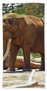 Bull Elephant Bath Towel