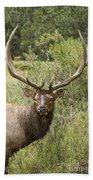 Bull Elk Eyes Bath Towel