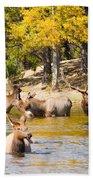 Bull Elk Watching Over Herd 4 Bath Towel