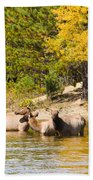 Bull Elk Watching Over Herd 5 Bath Towel