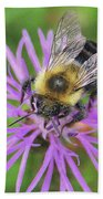 Bumblebee On A Purple Flower Bath Towel