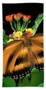 Butterfly Dryadula Heliconius Feeding Bath Towel