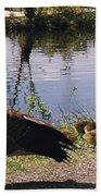 Canadian Geese At Trojan Lake Ny Bath Towel