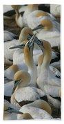 Cape Gannets Bath Towel
