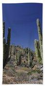 Cardon Pachycereus Pringlei Cacti Bath Towel