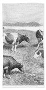 Cattle, 1888 Bath Towel