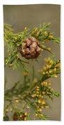 Cedar Rust Gall - Gymnosporangium Juniperi-virginianae Bath Towel