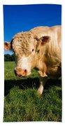 Charolais Bull, Ireland Bath Towel