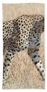 Cheetah Stepping Out Bath Towel