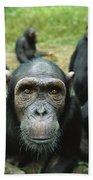 Chimpanzee Pan Troglodytes Female Bath Towel
