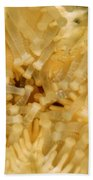 Close-up Of A Starfish Mouth Bath Towel