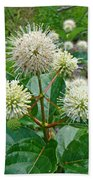Common Buttonbush - Cephalanthus Occidentalis Bath Towel