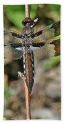 Common Whitetail Dragonfly - Plathemis Lydia - Female Bath Towel